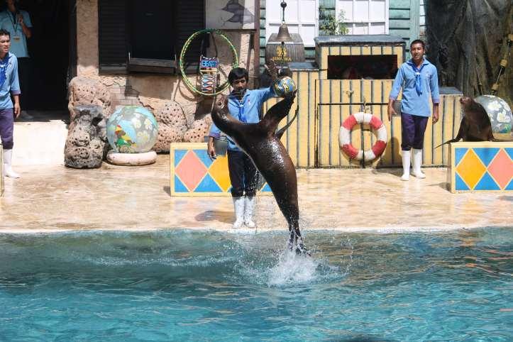 Sea-Lion show